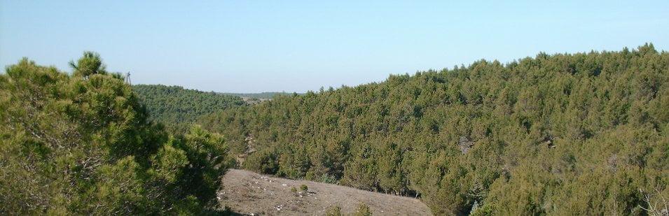foresta-mercadante-banner