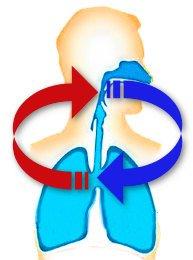 respirazione_circolare